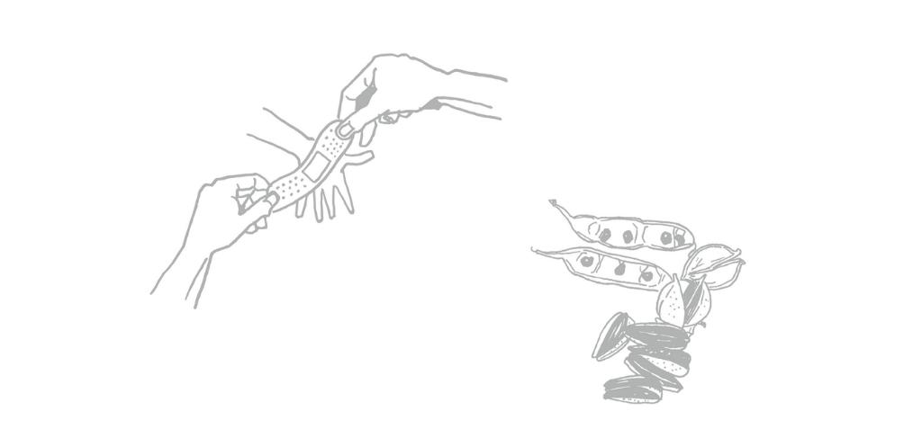 絆創膏と種
